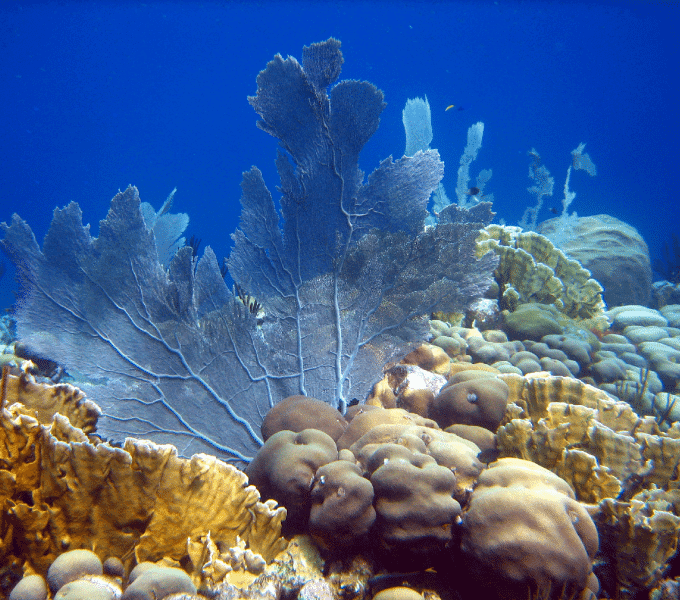 Curacao Dive Site Guide | Playa Hulu | Dive Curaçao