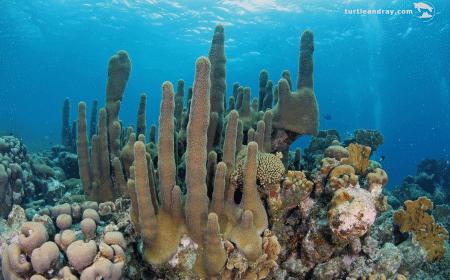 Curacao Dive Site Guide | Beacon Point | Dive Curaçao