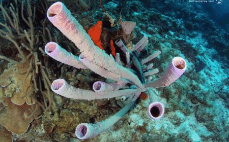 Fuikbaai - Booby Trap | Curaçao Diving Guide | Dive Travel Curacao