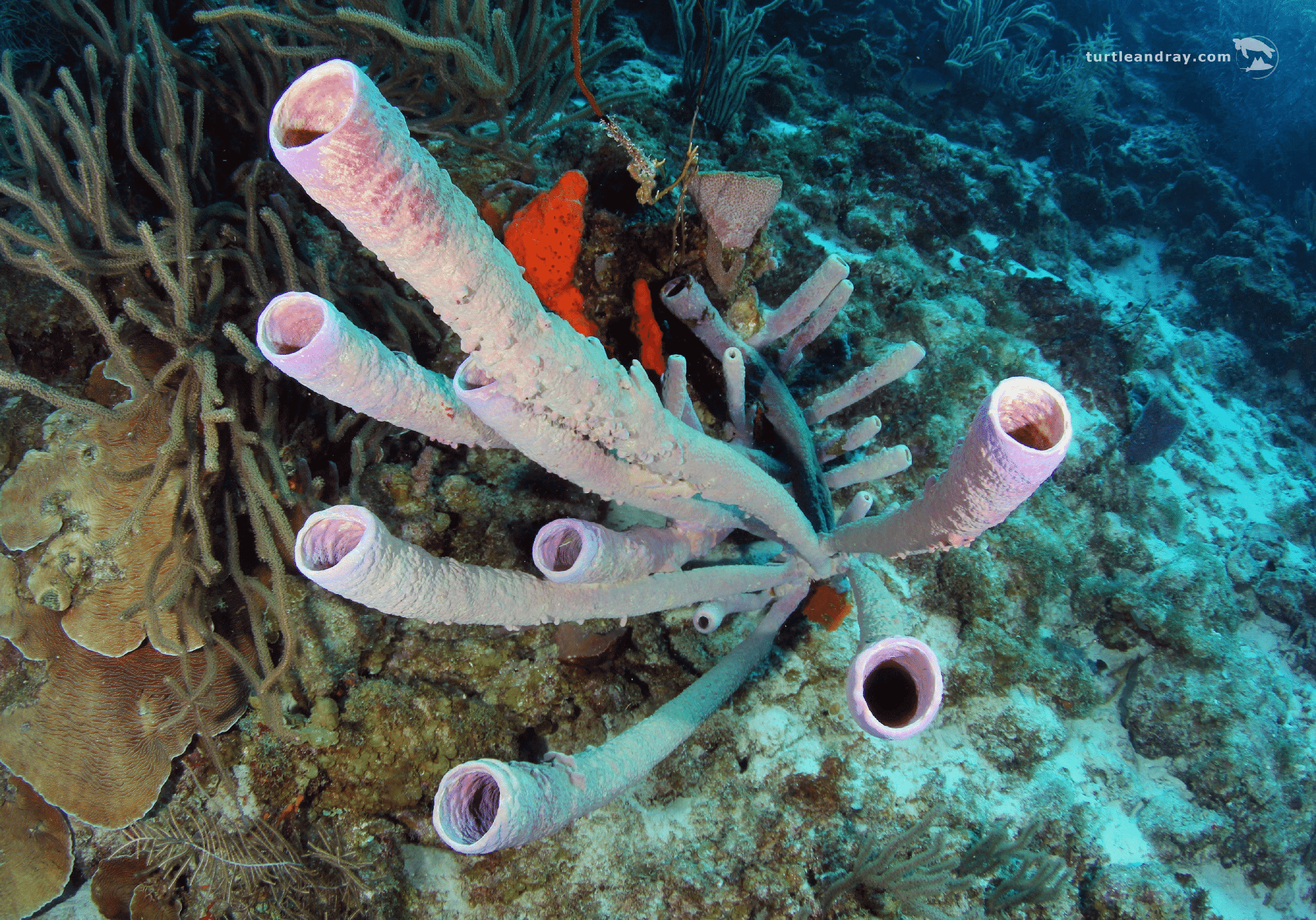 Booby Trap   Curaçao Diving Guide   Dive Travel Curacao