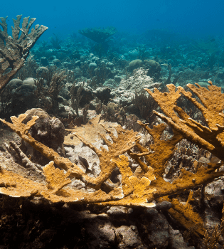 Curacao Dive Site Guide   Cornelius Bay Dive Site   Dive Curaçao