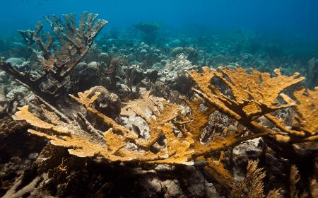 Curacao Dive Site Guide | Cornelius Bay Dive Site | Dive Curaçao