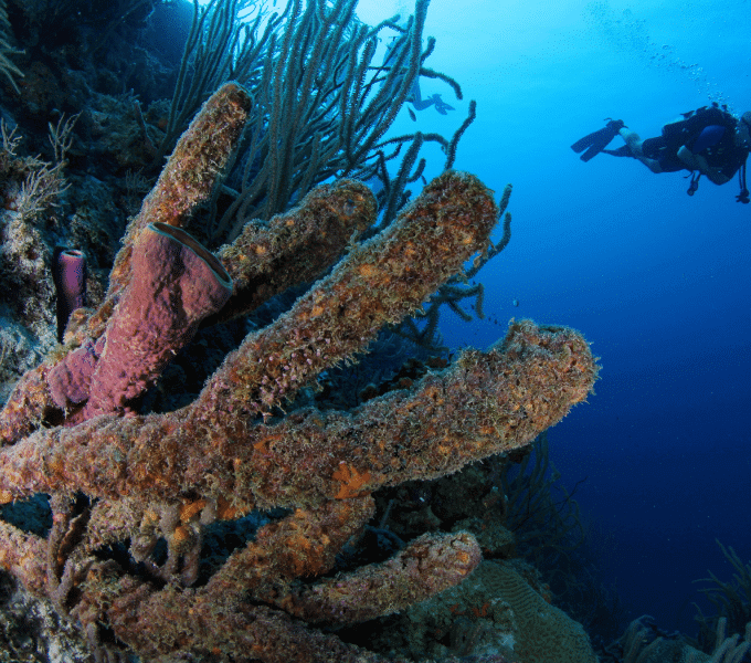 Curacao Dive Site Guide | Directors Bay | Dive Curaçao