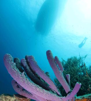 Curacao Dive Site Guide   Divers Leap   Dive Curaçao