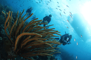 Curacao Dive Festival | World Class Vacation Destination | Dive Curaçao