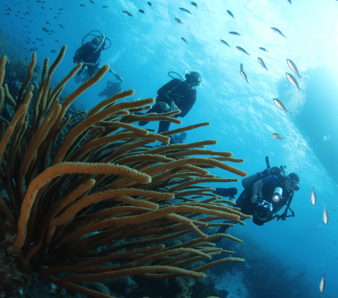 Curacao Dive Festival   World Class Vacation Destination   Dive Curaçao