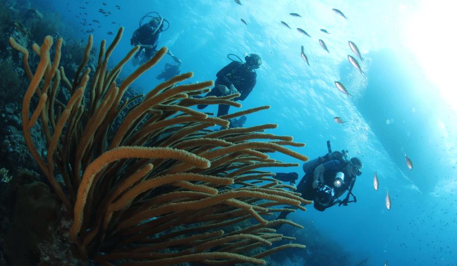 Curacao Dive Festival | World Class Vacation Destination | Dive Curaçao