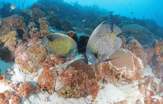 Curacao Dive Site Guide | Piscadera Long Beach | Dive Curaçao