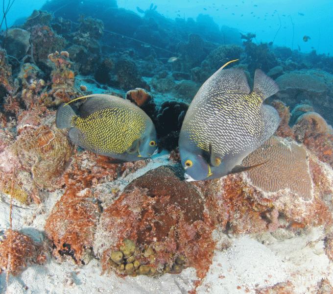 Curacao Dive Site Guide   Piscadera Long Beach   Dive Curaçao