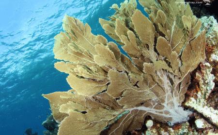 Curacao Dive Site Guide | Kathys Paradise | Dive Curaçao