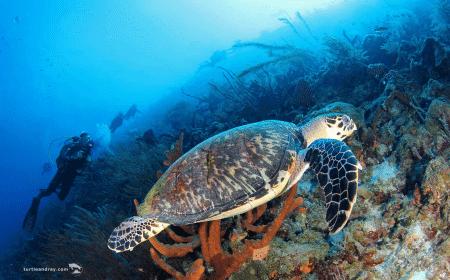 Klein Curacao Isla | Curaçao Dive Site Guide | Dive Travel Curacao