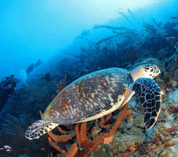 Curacao Dive Site Guide | Klein Curacao | Dive Curaçao