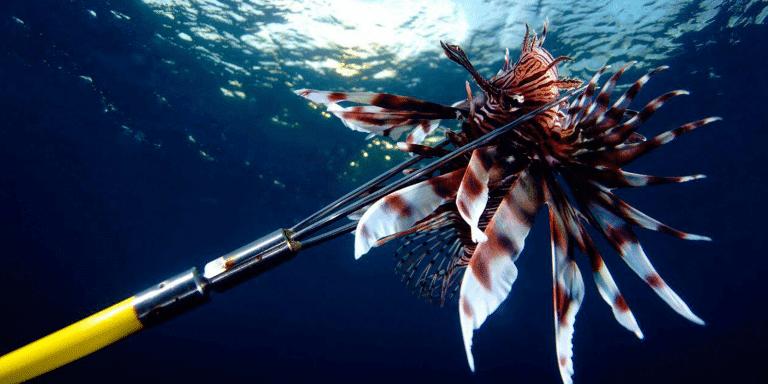 Lionfish Curacao | Dive Curaçao