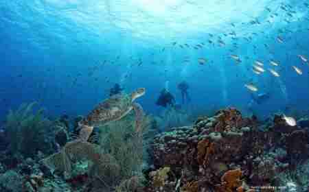 Coral Reefs of Curacao | Sustainable Tourism | Dive Curaçao