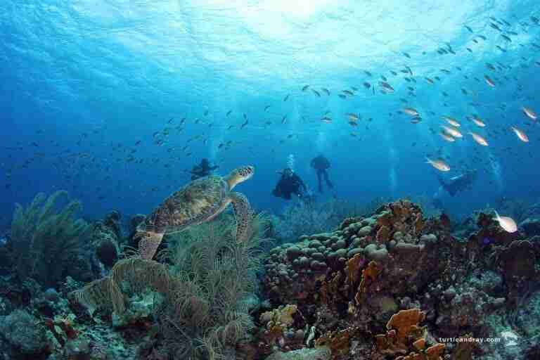 State of Curacao's Coral Reefs | Sustainable Tourism | Dive Curaçao