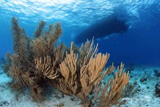 Curacao Dive Site Guide | Duanes Release | Dive Curaçao