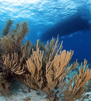 Sandys Plateau   Curaçao Dive Site Guide   Dive Travel Curacao