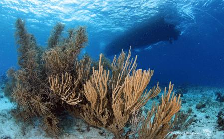 Sandys Plateau | Curaçao Dive Site Guide | Dive Travel Curacao