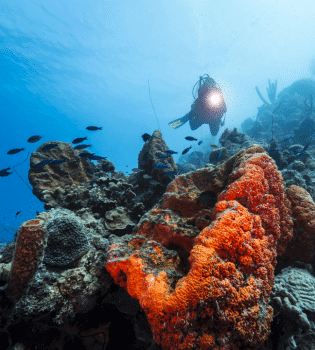 Curacao Dive Site Guide   Hells Corner   Dive Curaçao
