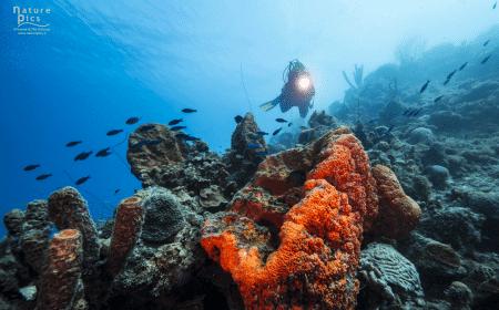 Curacao Dive Site Guide | Hells Corner | Dive Curaçao