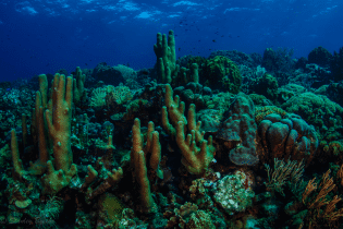 Seldom Reef | Curaçao Dive Site Guide | Dive Travel Curacao