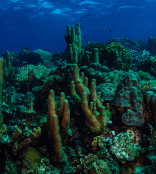Seldom Reef   Curaçao Dive Site Guide   Dive Travel Curacao