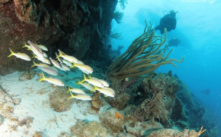 Small Wall | Curaçao Dive Site Guide | Dive Travel Curacao