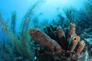 Sponge Forest | Curaçao Dive Site Guide | Dive Travel Curacao