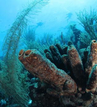 Sponge Forest   Curaçao Dive Site Guide   Dive Travel Curacao