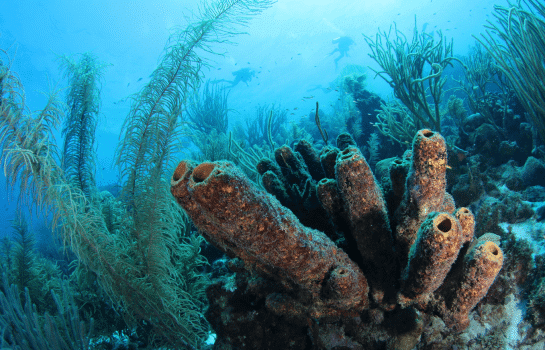 Curacao Dive Site Guide | Sponge Forest | Dive Curaçao
