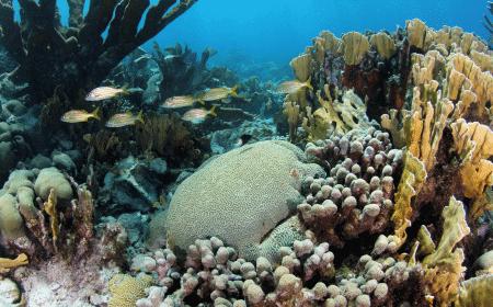 Pestbaai | Curaçao Dive Site Guide | Dive Travel Curacao
