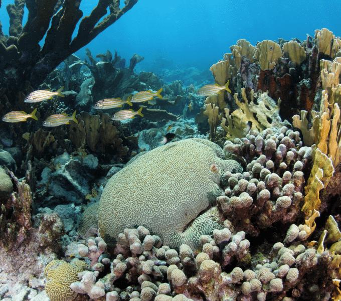 Curacao Dive Site Guide   Pestbaai   Dive Curaçao
