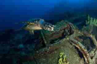 Vaersenbaai Car Wrecks | Curaçao Dive Site Guide | Dive Travel Curacao