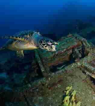 Vaersenbaai Car Wrecks   Curaçao Dive Site Guide   Dive Travel Curacao
