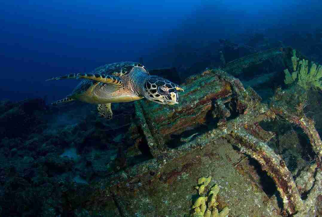 Curacao Dive Site Guide | Vaersenbaai Car Wrecks | Dive Curaçao