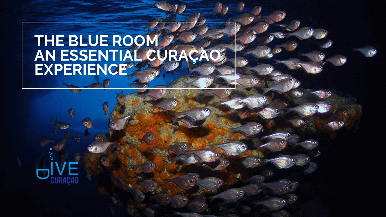 Blue Room Curacao | Dive Travel Curacao