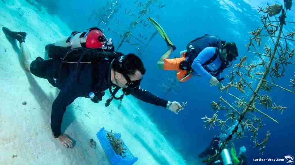 Dive Travel Curacao | Coral Restoration Curacao