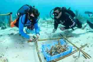 Coral Restoration in Curacao | Reef Renewal Curacao | Dive Curacao