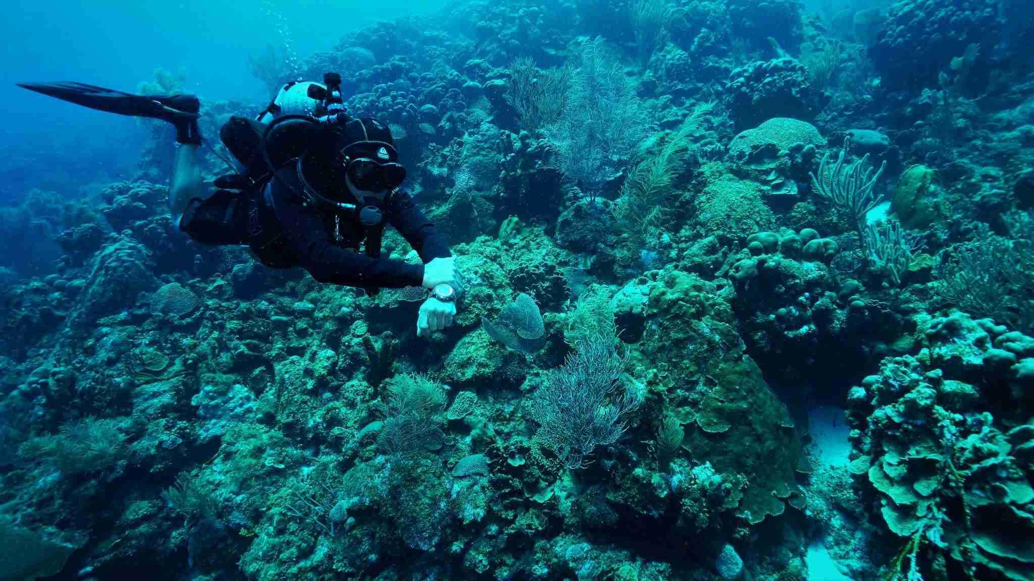 Bryan Horne   Dive Curaçao