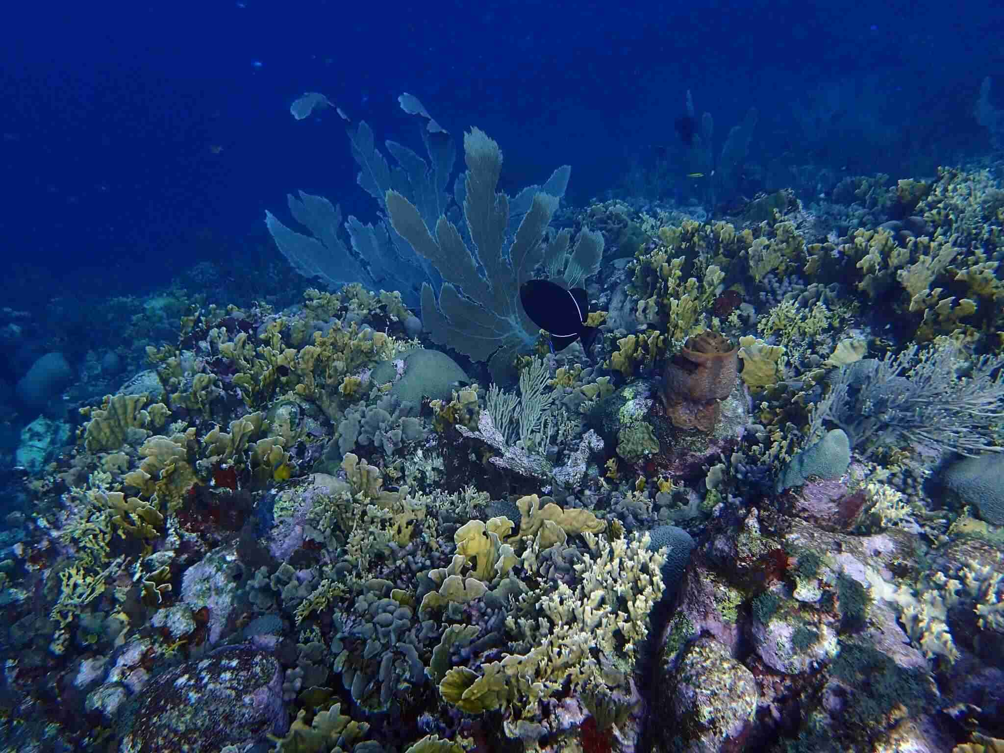 Curacao Nature Conservation | Dive News Curacao