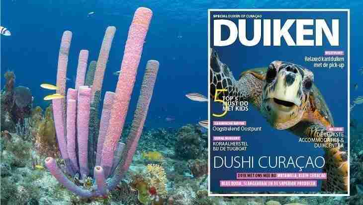 Duiken Magazine | Dive Travel Curacao