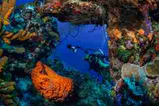 Curacao Macro Photography | A Paradise for Underwater Photographers