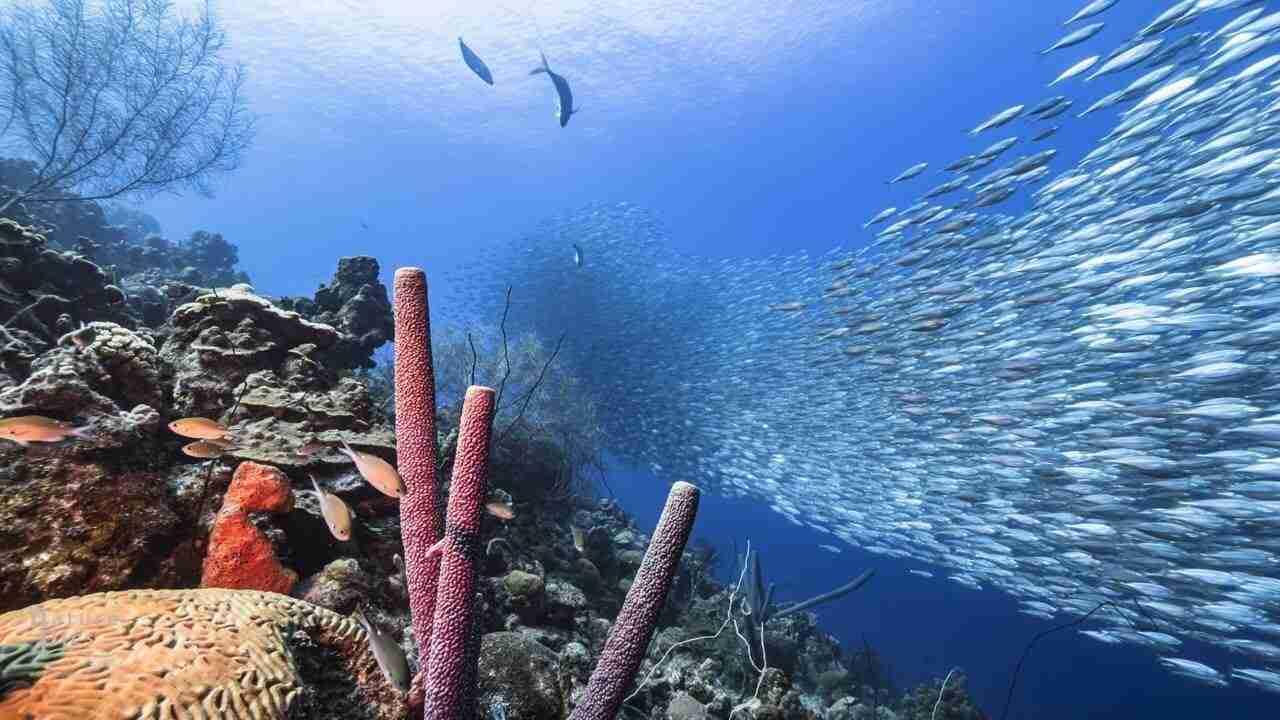 Partners | Experience Dive Curaçao | Dive Travel Curacao