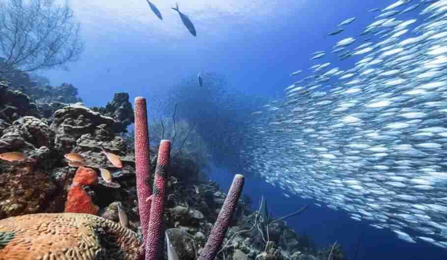 Scuba Digital | Scuba Diving Curaçao Vacations | Dive Travel Curacao
