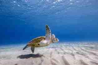 Curacao: Die Freiheit des Tauchens | Tauchurlaub | Dive News Curaçao