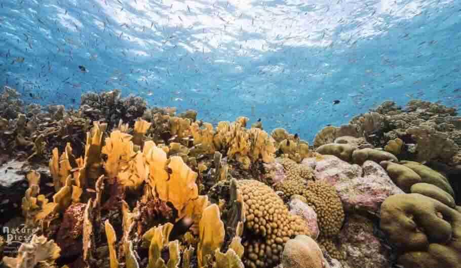 Top News Stories of 2020 | Scuba Diving Curacao | Dive News Curaçao