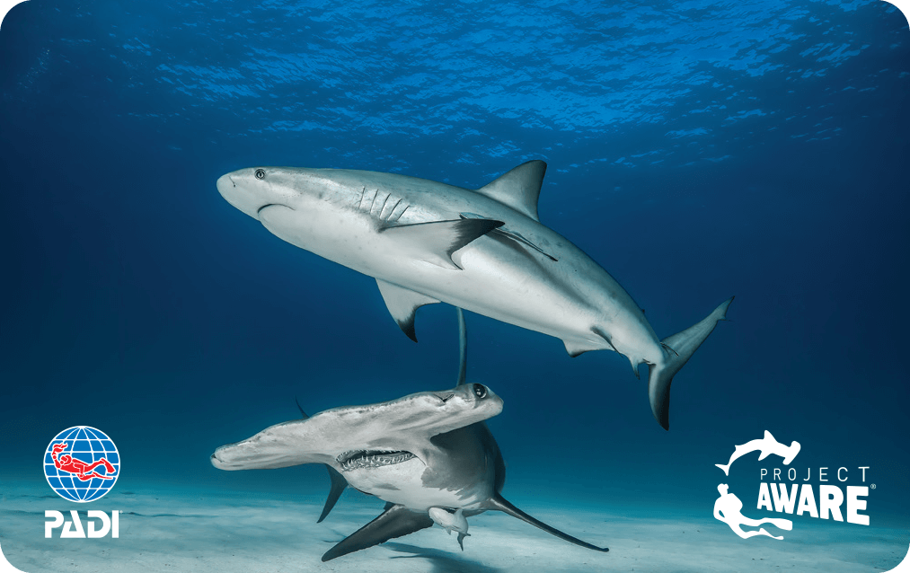 Shark Conservation - Project AWARE | Dive Curacao