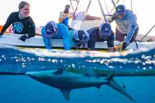 Caribbean Shark Coalition | Sustainable Tourism | Dive Curacao