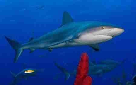 Shark Conservation in Curacao | Sustainable Tourism | Dive Curaçao